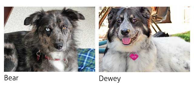 Bear and Dewey