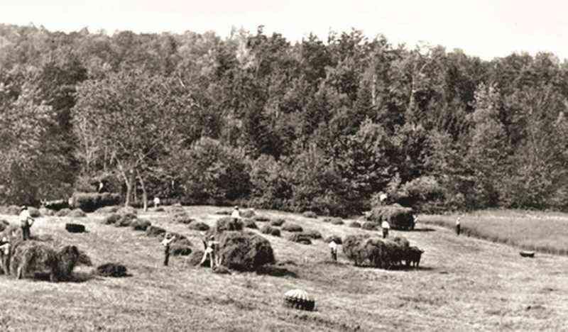 farm haying